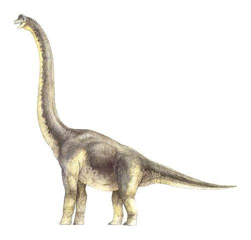 Dinodocus