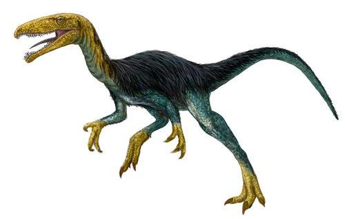 Velocisaurus