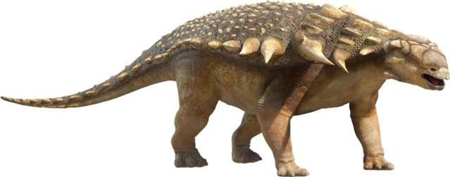Edmontonia Pictures & Facts - The Dinosaur Database