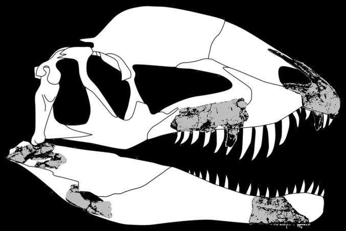 Dracovenator