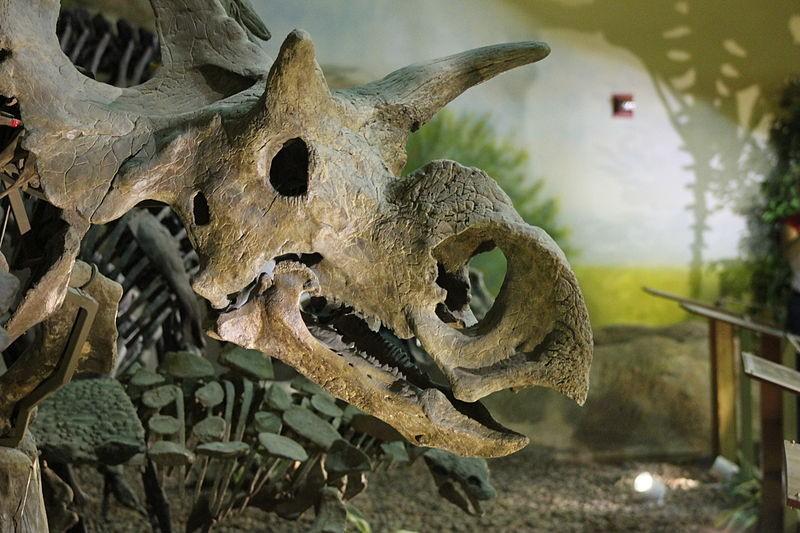 Metriacanthosaurus Medusaceratops Picture...