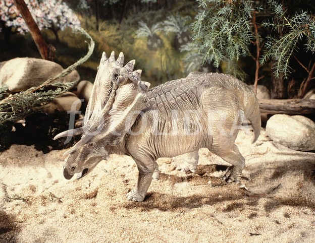 Anchiceratops