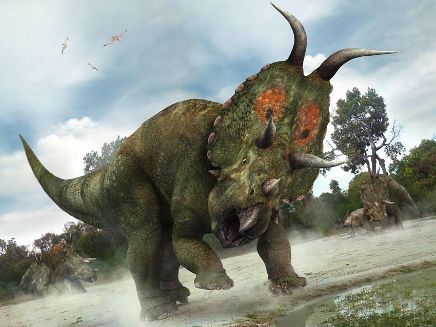 Diabloceratops Pictures Amp Facts The Dinosaur Database