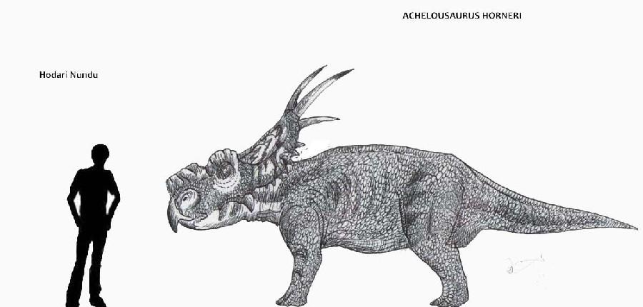Achelousaurus (возм: ахелоузавр), Late Cretaceous (Верхний мел)