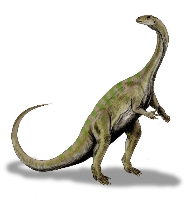 Aetonyx