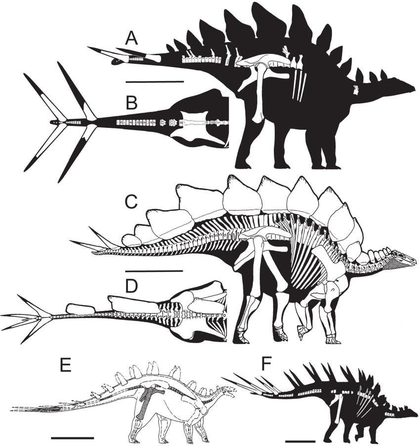 Alcovasaurus