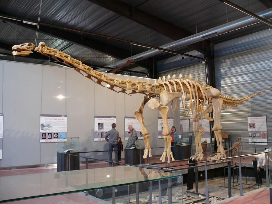Ampelosaurus