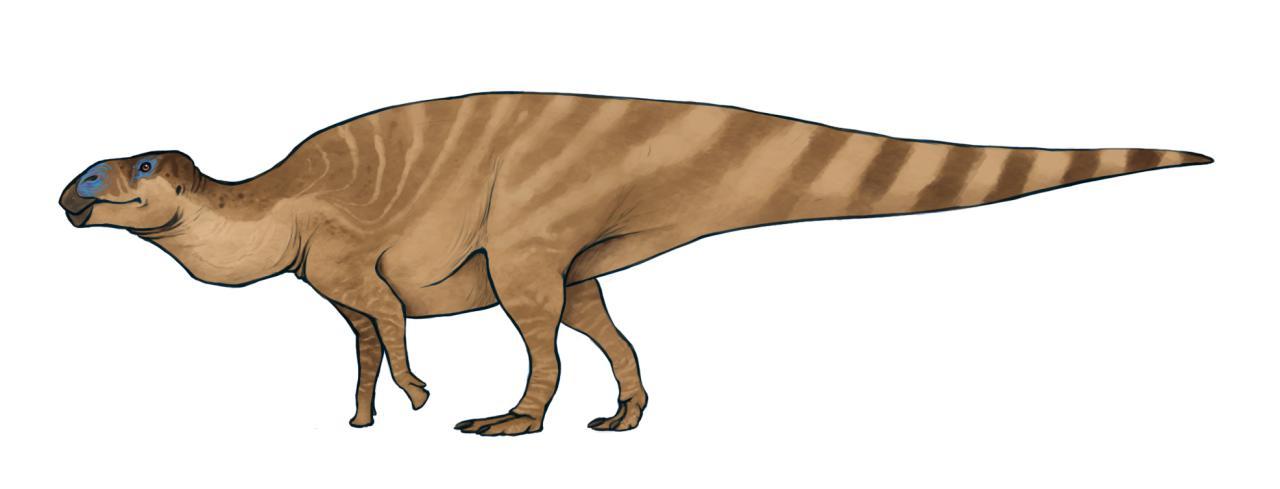 Amtosaurus