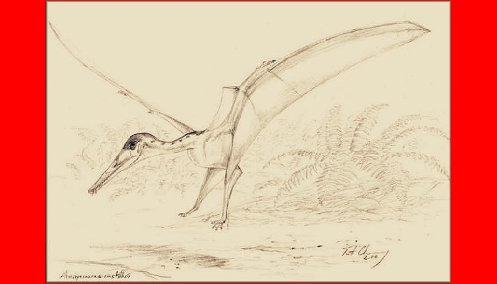 Araripesaurus