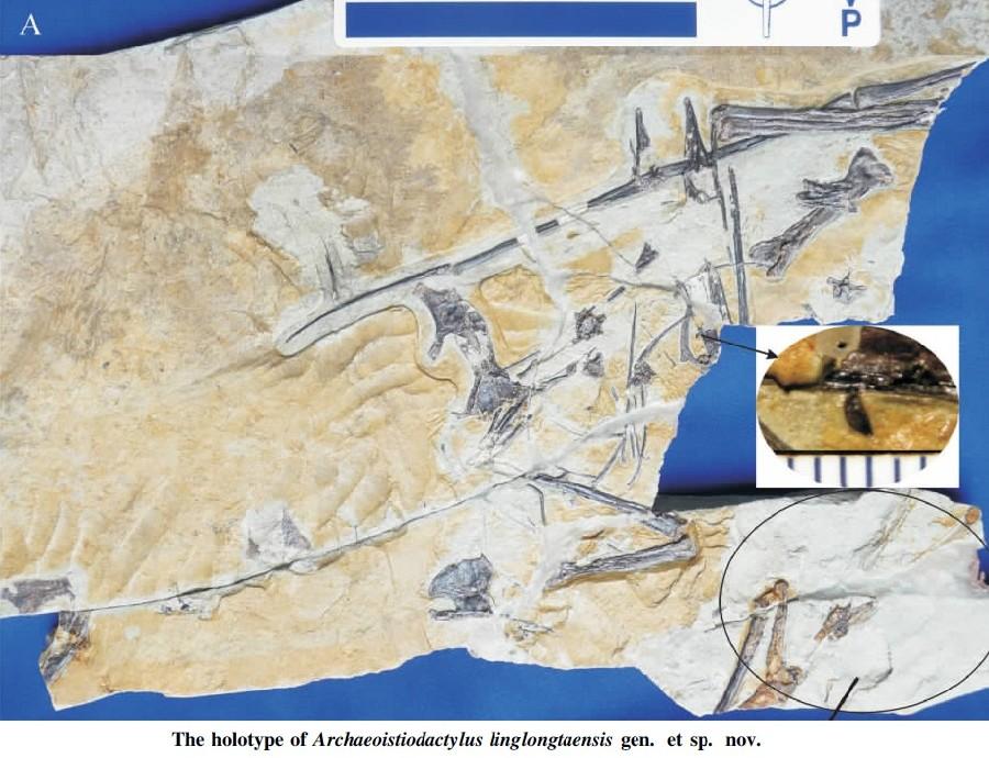 Archaeoistiodactylus