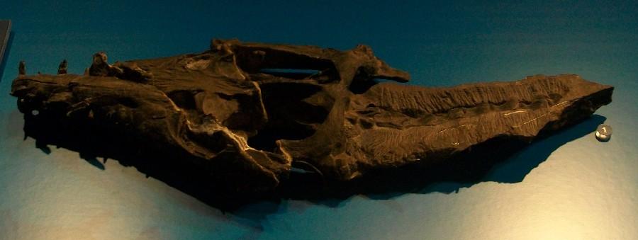 Augustasaurus