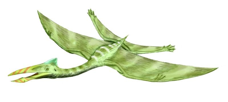 Bakonydraco