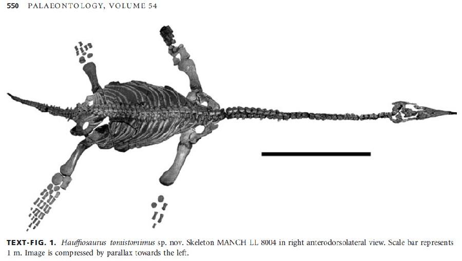 Hauffiosaurus
