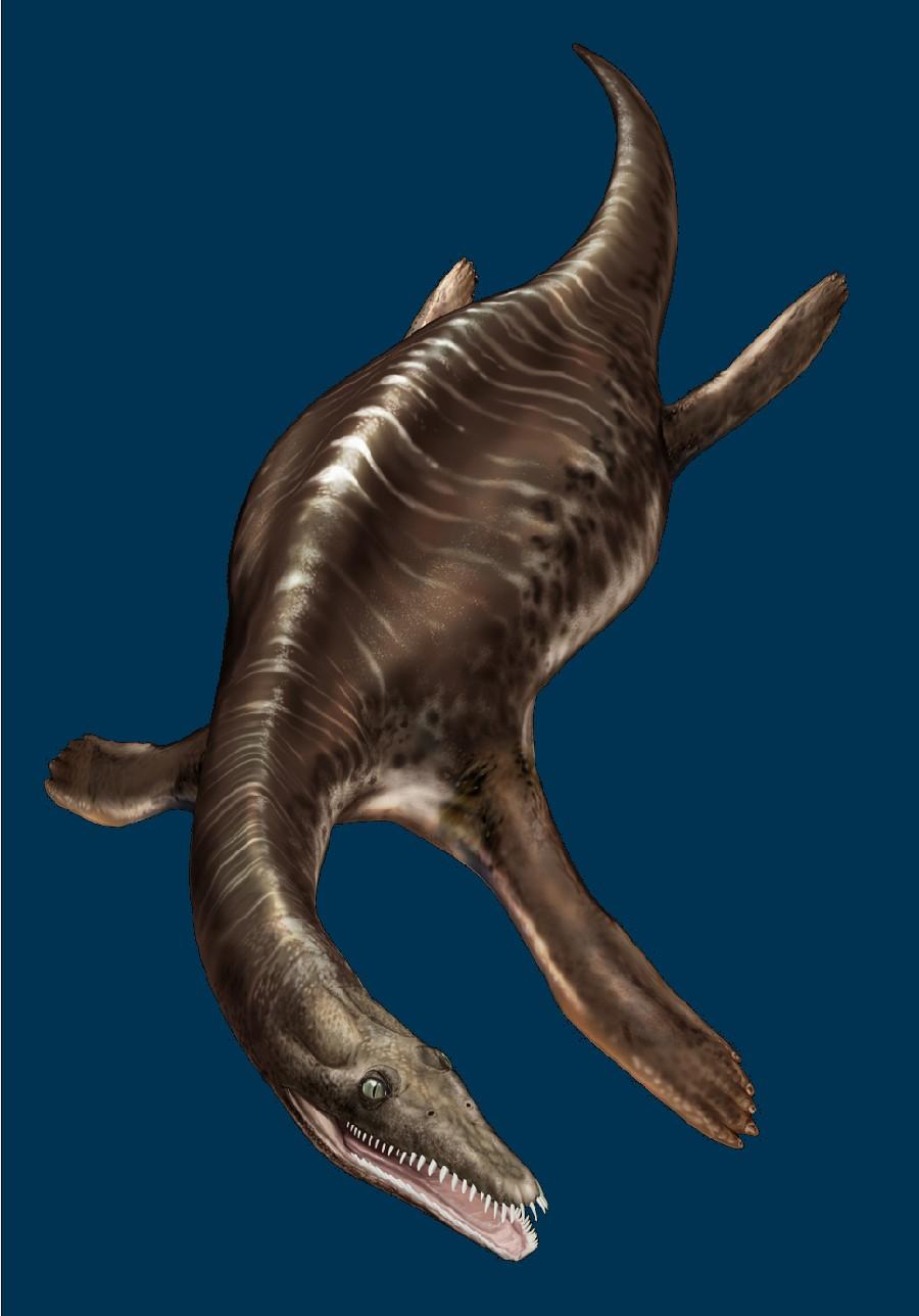 Bobosaurus