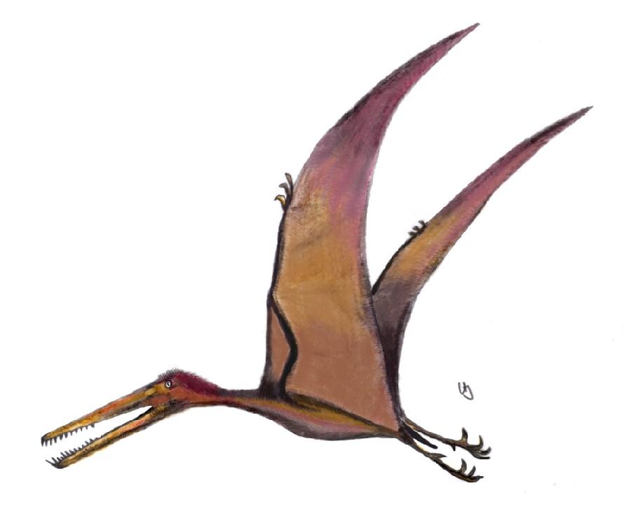 Boreopterus