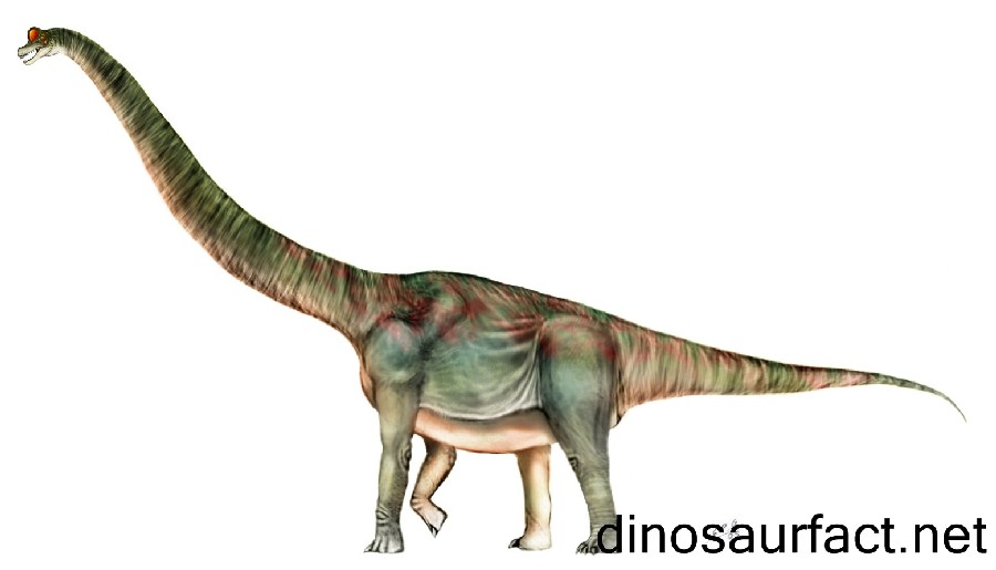 brachiosaurus pictures facts the dinosaur database