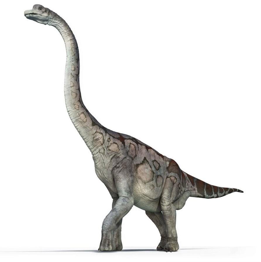 brachiosaurus pictures u0026 facts the dinosaur database