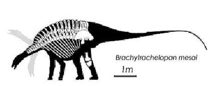 Brachytrachelopan