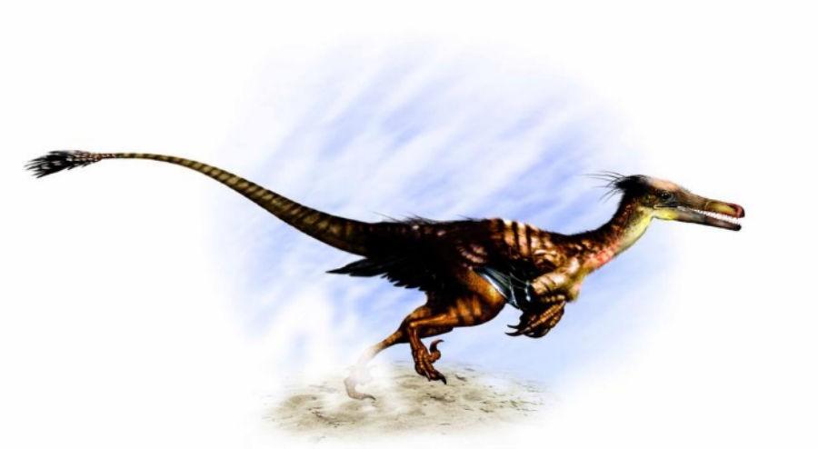 Buitreraptor
