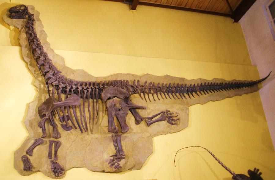 Cathetosaurus