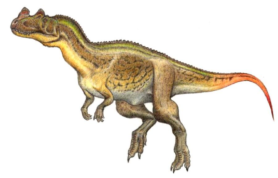 Metriacanthosaurus Ceratosaurus Pictures ...