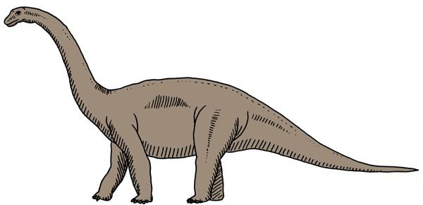 Cetiosaurus