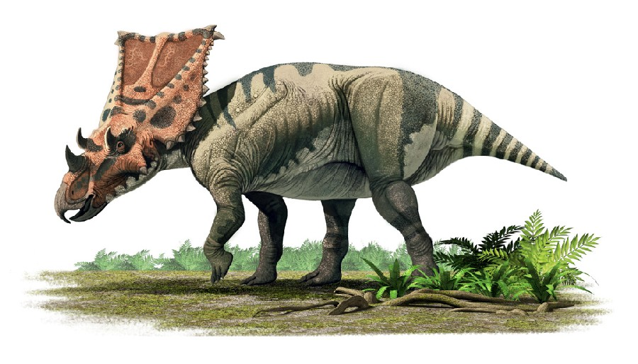 Chasmosaurus Pictures Amp Facts The Dinosaur Database