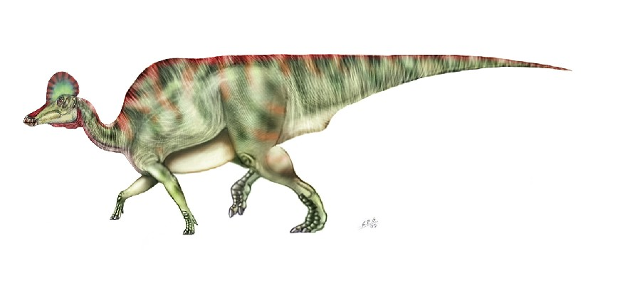 corythosaurus pictures amp facts the dinosaur database