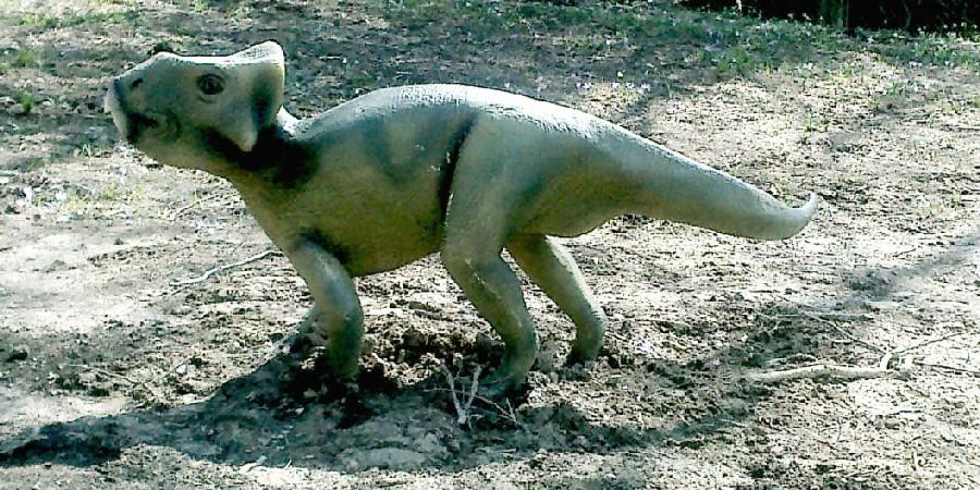 Craspedodon