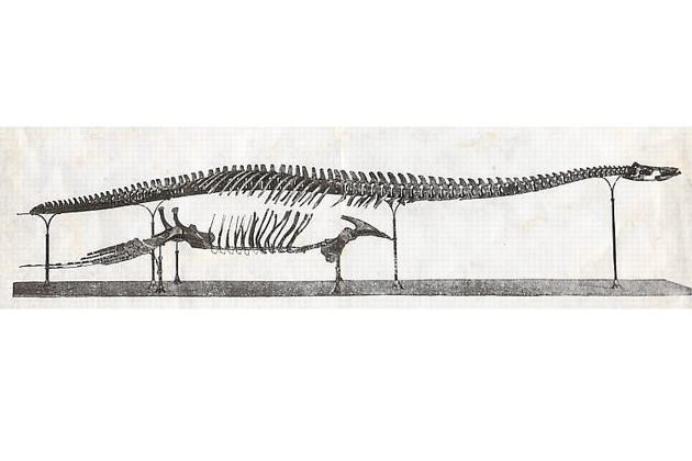 Brancasaurus