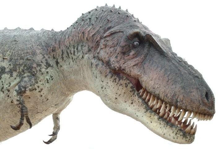 Daspletosaurus Picture...