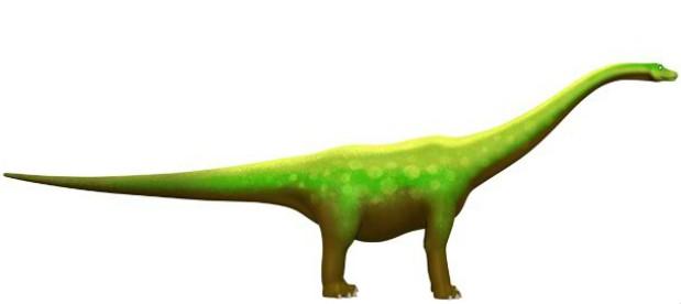 Diplodocus pictures facts the dinosaur database - Dinosaure diplodocus ...
