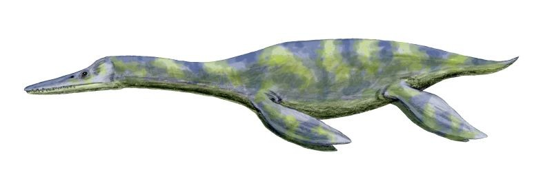 Dolichorhynchops