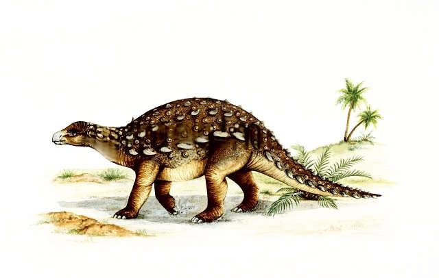 Dracopelta