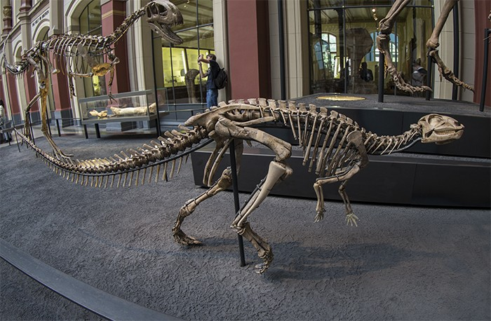 Dysalotosaurus