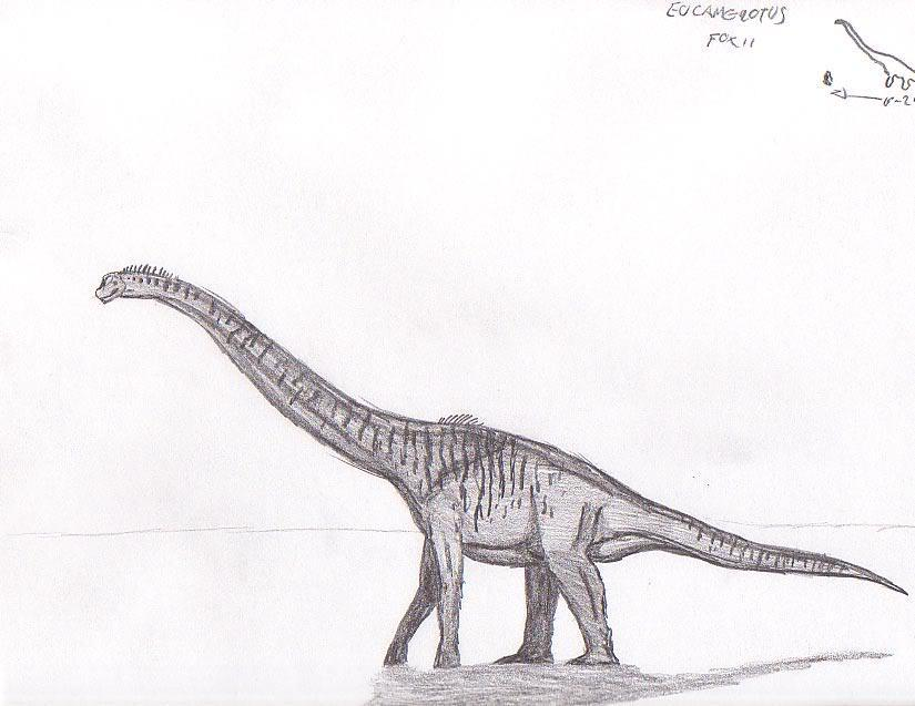 Eucamerotus