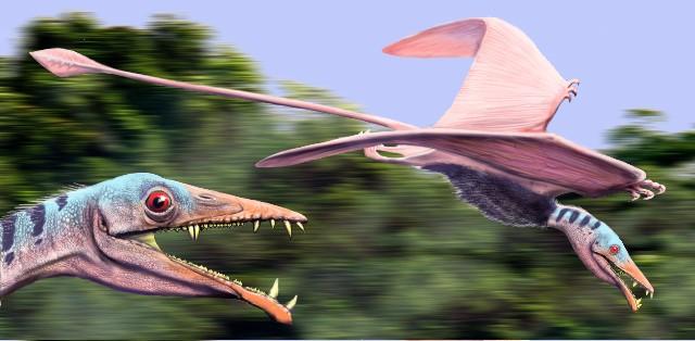 Eudimorphodon