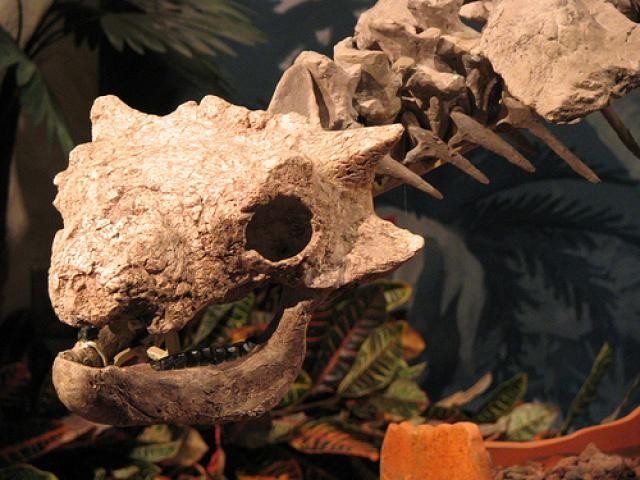 Crichtonsaurus