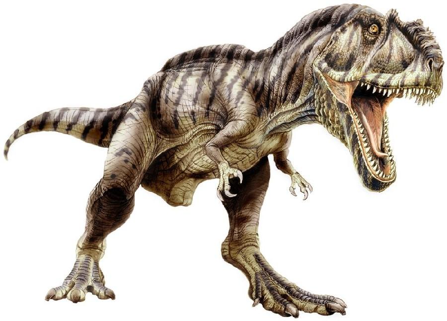 Image result for Giganotosaurus carolinii