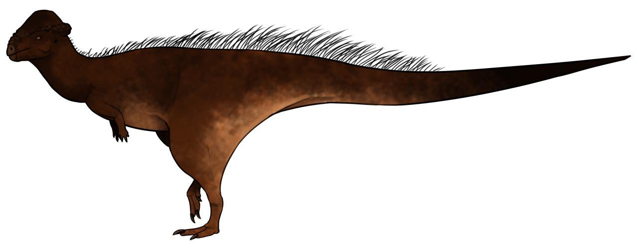 Gravitholus