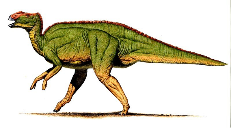 hadrosaurus pictures   facts the dinosaur database funny clipart for finding jobs funny clipart thanksgiving