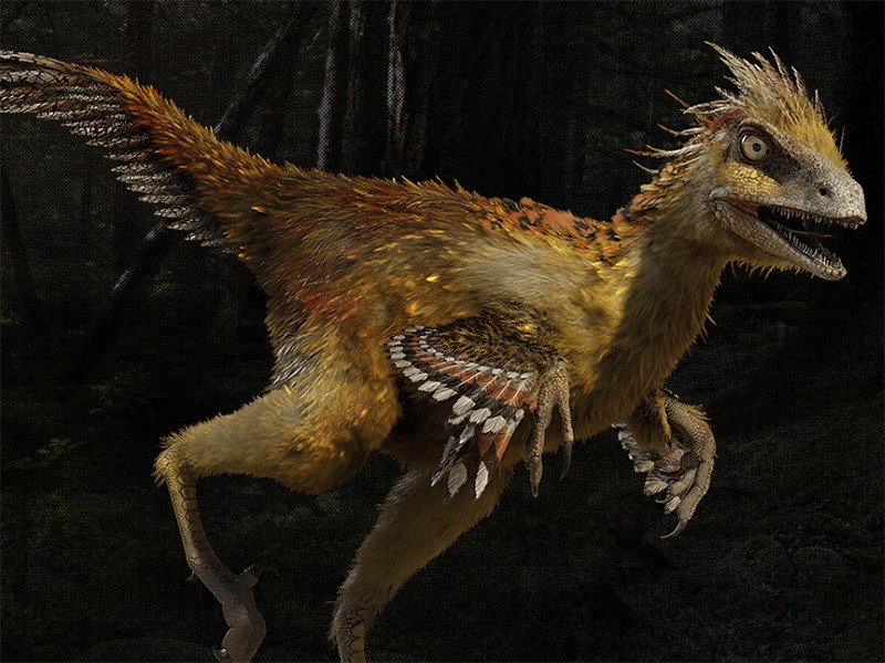 Image result for Hesperonychus toptenz.net