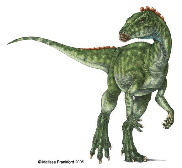 Heterodontosaurus