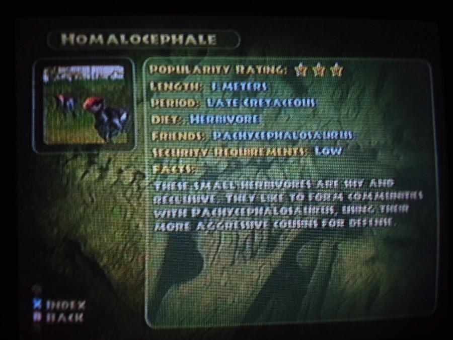 Homalocephale