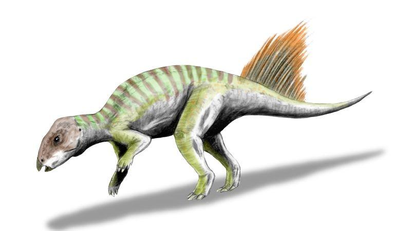 Hongshanosaurus