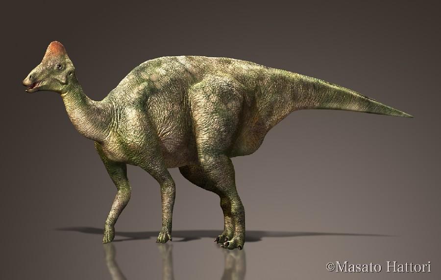 Hypacrosaurus