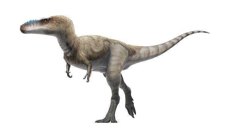 Iliosuchus