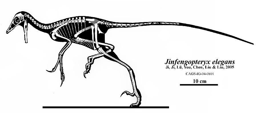 Jinfengopteryx