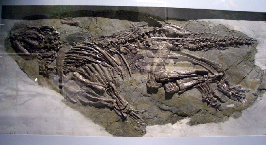 Jinzhousaurus