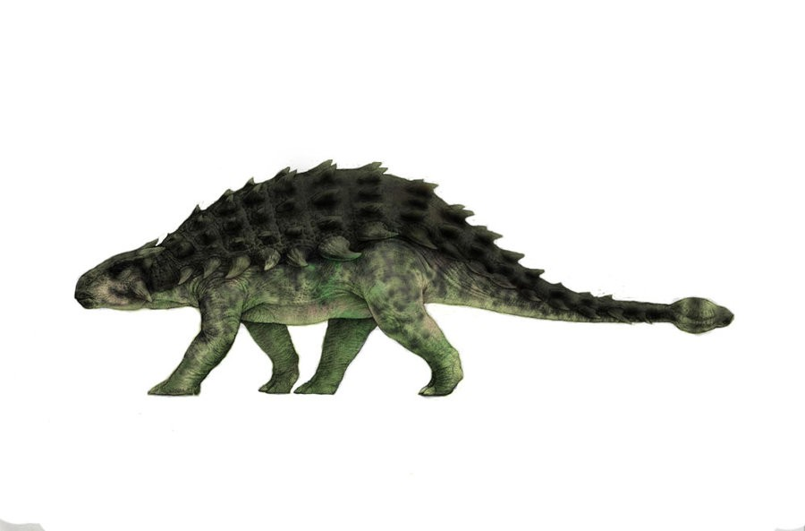 an evaluation of sources on historical geology about ankylosaurus dinosaurs Alaska history paper on dinosaurs ankylosaurus the dinosaurs died out towards the end of this period evaluation of sources 7-8 section d.